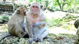 Ah... Action Like This , What is SweetPea Do Like This with Mom Popeye? | SP hungry food from mom |