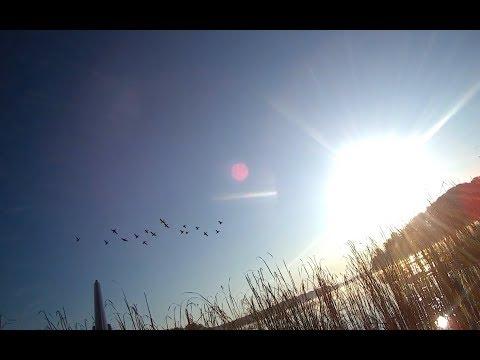 Утренняя зорька. Охота на утку с профилями.