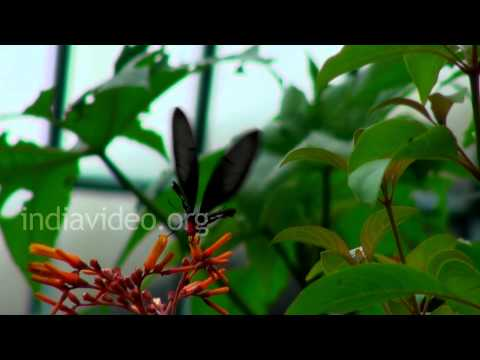 Butterfly park, Bannerghatta, Bangalore
