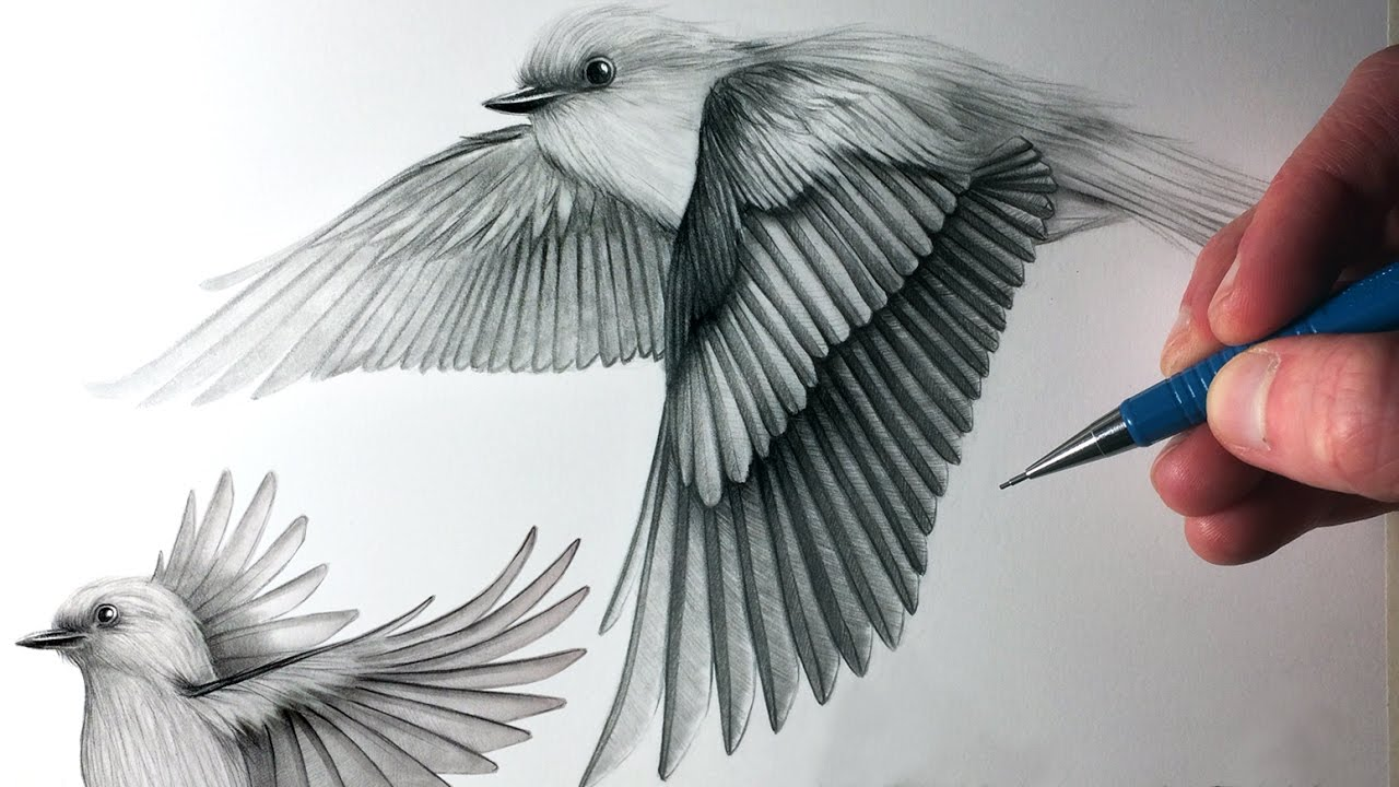 How To Draw Birds Flying - YouTube