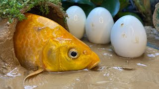 Stop Motion ASMR - Huge Goldfish Swimming in Mud Hunting Eel Experiment Primitive Cooking