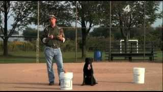 Intro To Baseball Handling Drill: Retriever Training For Hunters (part 14)