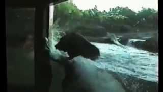Приколы с животными за стеклом (((4 зоопарк.