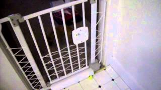 Penny Making The Baby Gate Null In 5 Seconds