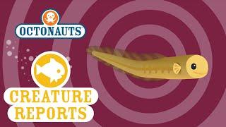 Octonauts: Creature Reports - Baby Eels