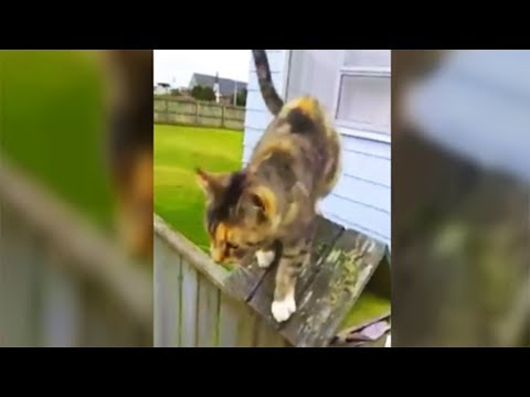 Cat Chases Down The Mailman Every Day To Make One Brazen Dem