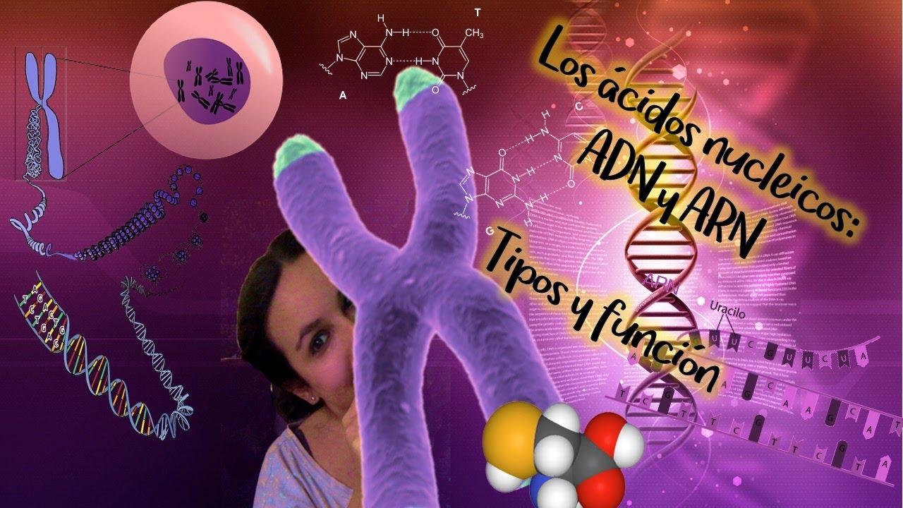 Ácidos nucléicos: ADN y ARN. Tipos y función. Bio[ESO]sfera - Biología