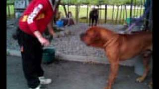 山梨 サルVS土佐犬.