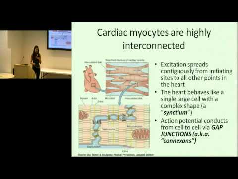 Heart 2.0 (Beta): Engineering and the Human Heart