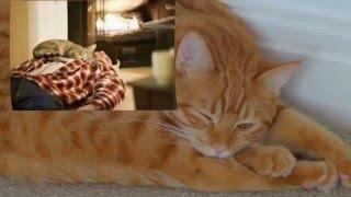 Что значит, когда кот или кошка спят в углу?!/Зачем запускают первой кошку в новый дом?!