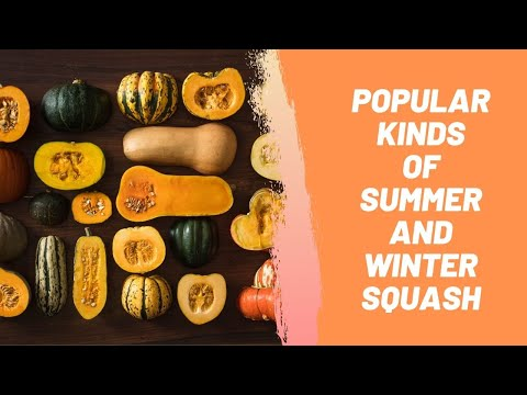Popular Kinds of Summer and Winter Squash