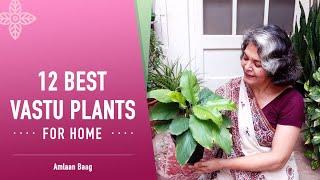 12 Best Vastu Plants For Home | सुखमय जीवन के लिए लगाएं ये शुभ वास्तु पौधे