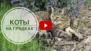 Животные в саду ➡ Как отвадить кошек от грядок? 🌟 Полезные советы hitsadTV