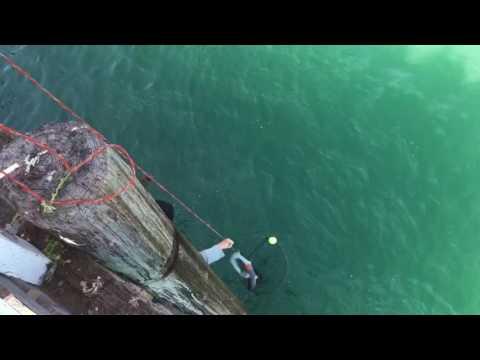4 Thresher Sharks In One Day. Fishing For Threshers Malibu
