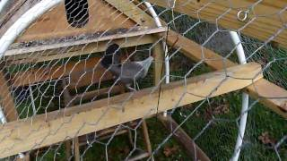 Panasonic Lumix Dmc-fz35 Hd Chicken Coop Test. Avchd Lite Size Compressed An Additional 38%.
