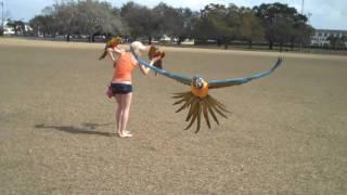Flocking Parrots