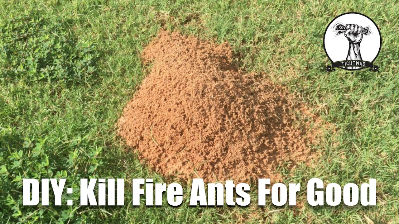 diy kill fire ants for good youtube. Black Bedroom Furniture Sets. Home Design Ideas