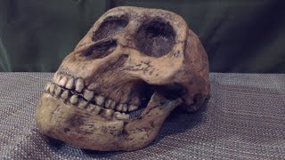 10 Mysterious Discoveries Made by The Discovery Channel