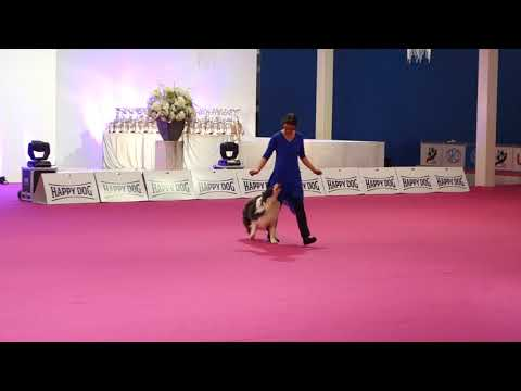 Dog Dance Winter Show Nitra 2018 - Heelwork to Music Levin
