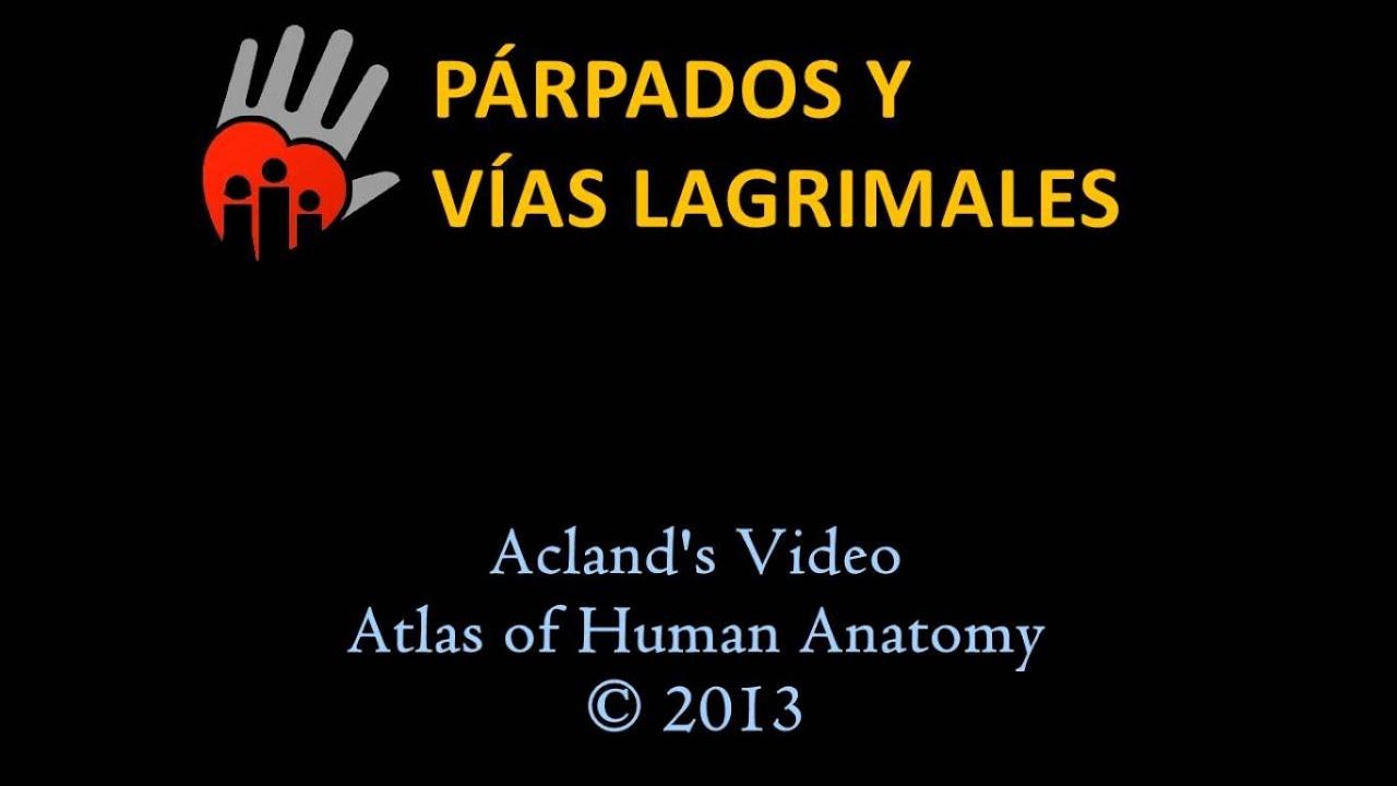 Anatomía de los párpados - YouTube