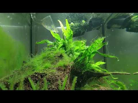 Algae growth in my hillstream setup