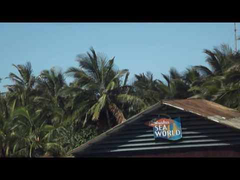 THE DOLPHIN SHOW #1 AT USHAKA MARINE WORLD, DURBAN-SOUTH AFRICA