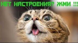смешные кошки!!!   :)  FANNY CATS!!! Серия9.