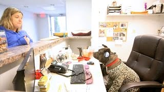 Gremlin Goes To Work - Life In The Dog House Ep. 32