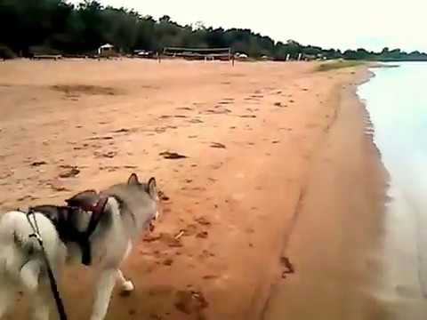 Коккорево осень пляж