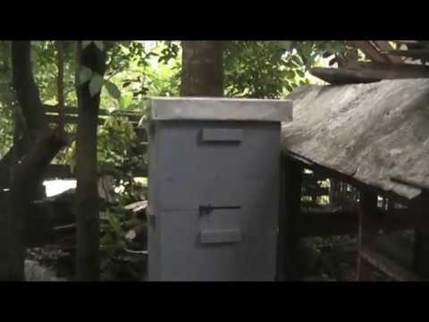 Setelah Lebih Dari Satu Bulan Lebah Tidak Kunjung Menempati Stuf