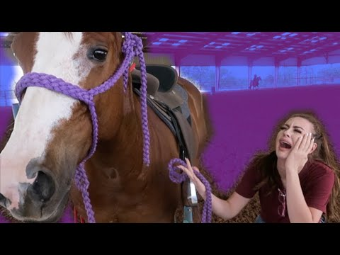 I'M SELLING HER HORSE! (Saddle Review)