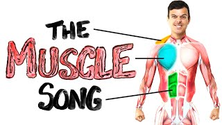 The Muscle Song (Memorize Your Anatomy)   SCIENCE SONGS