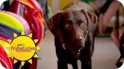 Perfekter Unterricht dank Hund: Vorteile vom Schulhund | SAT.1 Frühstücksfernsehen | TV