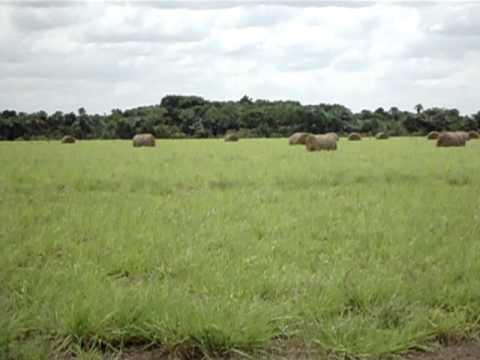 Tierras para ganadería extensiva o agricultura