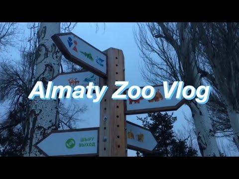 Almaty Zoo Vlog **snowing*