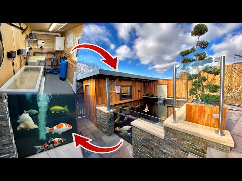 AMAZING KOI POND WITH FILTER ROOM AND FISH VIEWING WINDOW 👌
