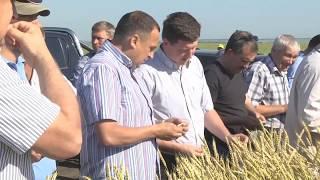 видео: 90 лет муниципальному району Большеглушицкий сельское хозяйство