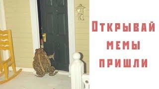 Лютые приколы и мемы не для гусей.  Top Meme News - угарные мемы.