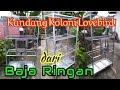 Kandang Ternak Lovebird Koloni Dari Baja Ringan Mustika Farm Balikpapan  Mp3 - Mp4 Download