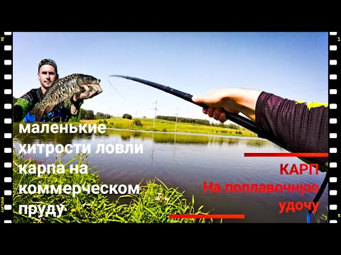 КАРП НА ПОПЛАВОК. ВЕСЕЛАЯ РЫБАЛКА НА ПЛАТНОМ ПРУДУ. Платная рыбалка Новокузнецк. РЫБАЛКА 2019
