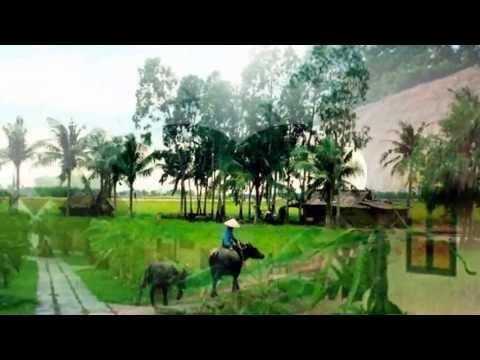 Đường Về Hai Thôn - Phi Nhung