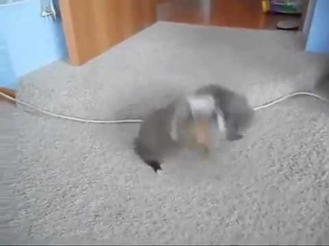 CAT KILLS DOG IN FIGHT TO THE DEATH!!!