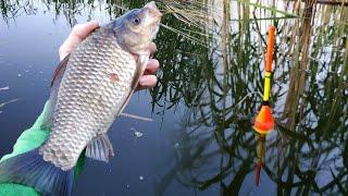 Ловля карася на поплавок Рыбалка в Беларуси 2021