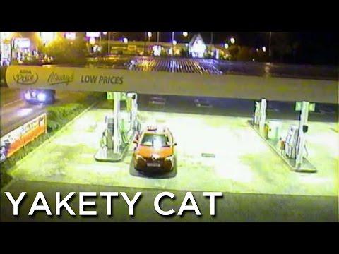 2007-10-05 'Yakety Cat'