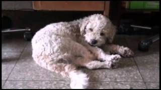 perro de hola soy german vs perro de fernanfloo