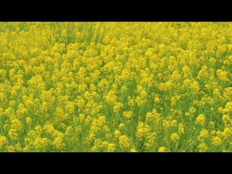 lindas fotos test in japan
