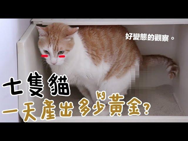 黃阿瑪的後宮生活-七隻貓一天產出多少kg黃金