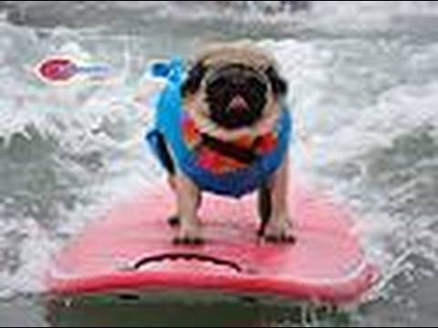 Best of Helen Woodward Surf Dog Surf Contest Del Mar