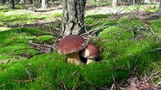 Смотрите сколько грибов. Вот это да!