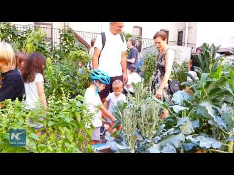 Vacant lots to community gardens, Harlem embraces the urban farming
